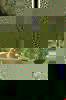08462e4ac88b2f1b804ec6229bafad1f53562332-4736-2
