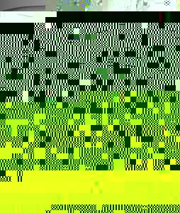 Photo_626ac6c22d4d219f4e7f2eae92b2d0d27ec75801-7348-2