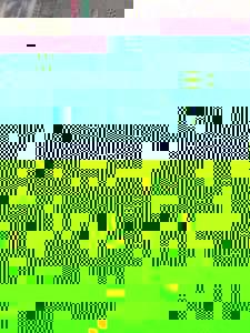 Photo_8ed57882038e1c4318278eb5ba140dc34aedacd6-1985-1