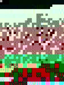 Photo_e8386c535b1668670b1e2527c8489867f8c5f6ed-2034-1
